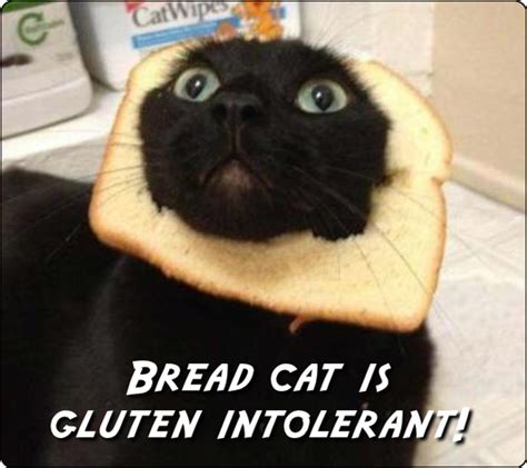 Bread Cat Meme - sensitive bread cat meme anonamos3021