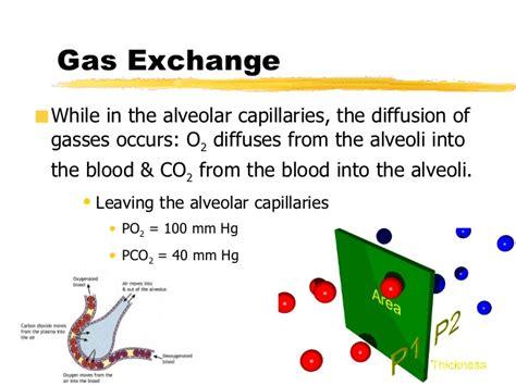 gas exchange across respiratory surfaces boundless biology alveolar capillary gas exchange bing images
