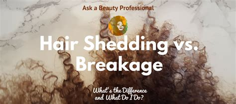 ask a professional hair shedding vs breakage