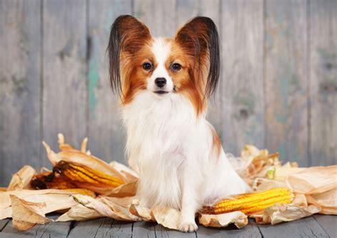 best house dog breed best house dogs four legged guru