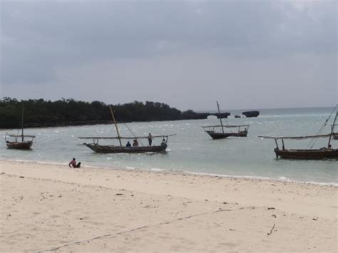 private boat charter zanzibar boat ride out picture of the safari blue zanzibar