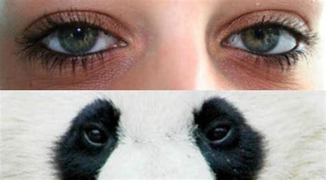 Mata Panda selamat tinggal mata panda 2018