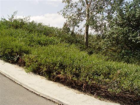 hillside erosion control landscaping network