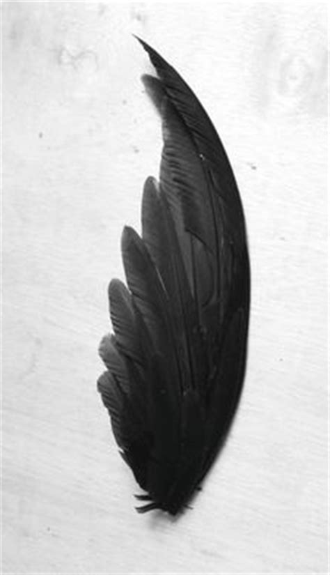 Crow Feather Wing Witchcraft for Mass Hypnosis   Indian