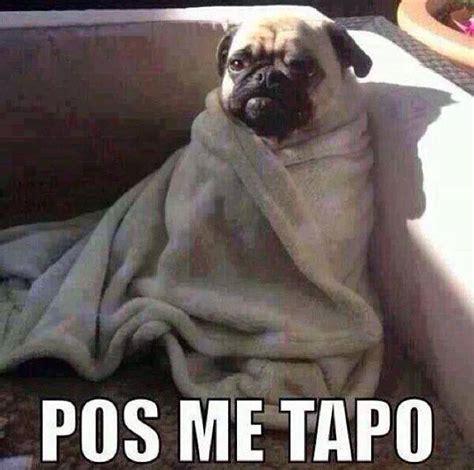 imagenes chistosas de buenas noches con frio memes chistosos de perros imagenes chistosas