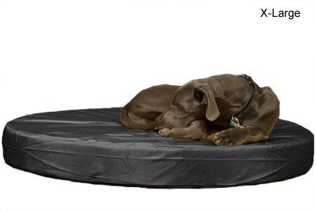indestructible dog bed indestructible dog beds webnuggetz com