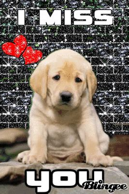 i miss you puppy miss you picture 116630739 blingee