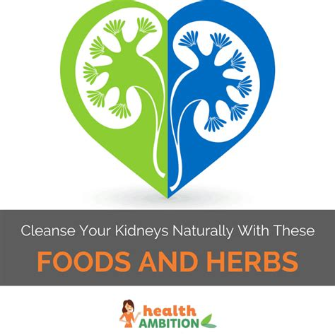 Cleanse And Detox Your Kidneys Naturally by How To Cleanse Your Kidneys Naturally With These Foods And
