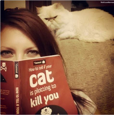 how to tell if your is in how to tell if your cat is plotting to kill you weknowmemes