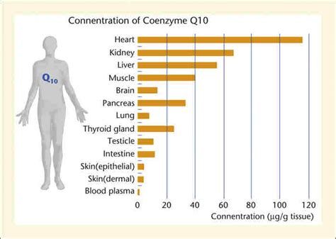 supplement q10 benefits benefits of coenzyme q10 coq10 28 images coenzyme q10