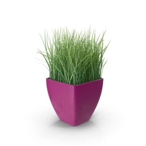 grass  purple planter png images psds