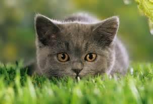 gegen katzen im garten die katzen vom garten fernhalten information mittel und