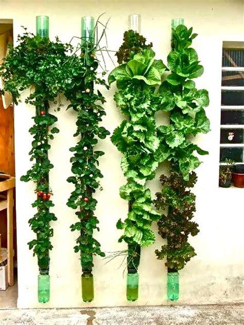 Vertical Food Garden Vertical Gardening Ideas View Thread Adlandpro Community