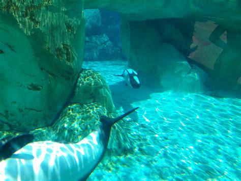 Gantungan Unci Motif Serfing Dolpin Set Of 5 aquatica orlando water park by seaworld orlando