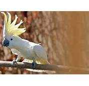 Pin Exotic Pet Birds On Pinterest