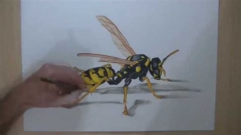 how to make 3d illusion l how to draw a wasp drawing 3d illusion youtube