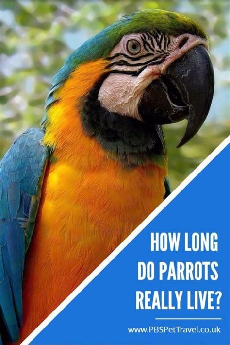 parrot lifespans  long  parrots   pbs pet