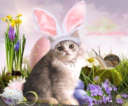 cat easter wallpaper 118 best 35 cats easter images on pinterest kittens