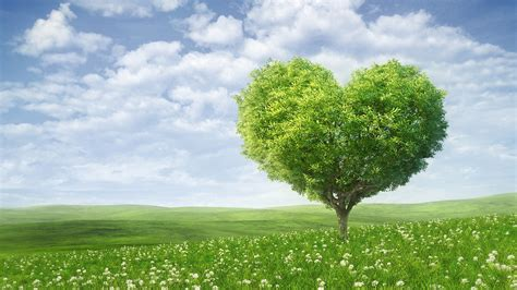 tree background hd photos tree wallpapers hd