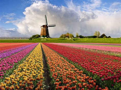 netherlands tulip fields you ll never regret having these 15 travel experiences