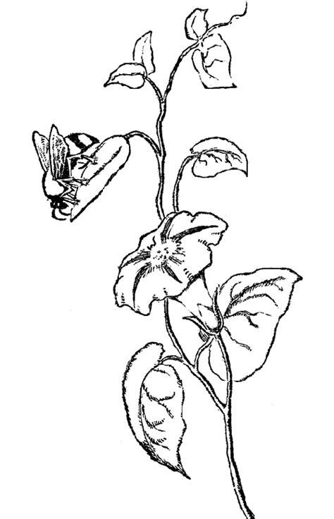 dibujos para colorear resultados de la b squeda pintar resultado de la b 250 squeda colorear animales