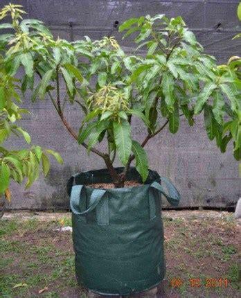 jual planter bag hijau 150 liter bibit