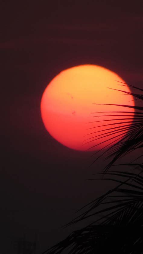 red orange sun leaves iphone wallpaper idrop news