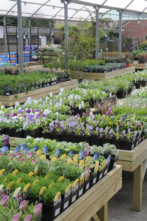 golden acres garden centre nurseries gardening