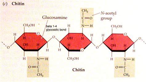 Https Www Scheller Gatech Edu Support Bio Book Mba Picturebook Mba 2019 Html by Structural Biochemistry Carbohydrates Chitin Wikibooks