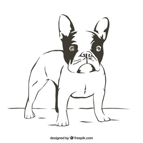 imagenes vector bulldog dibujo de bulldog descargar vectores gratis