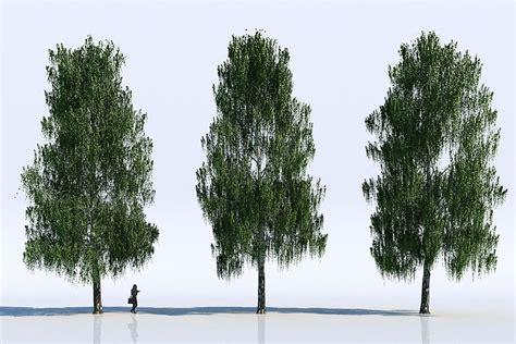 free tree model free 3d models trees viz