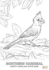 north carolina state bird coloring page  printable