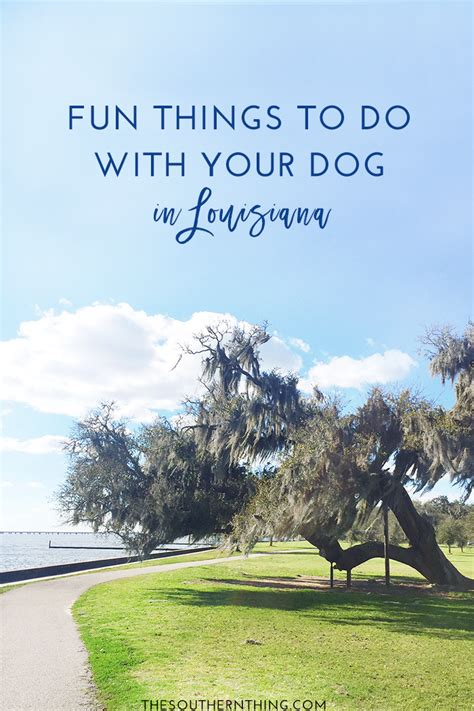 things to do with dogs things to do with your in louisiana the southern thing