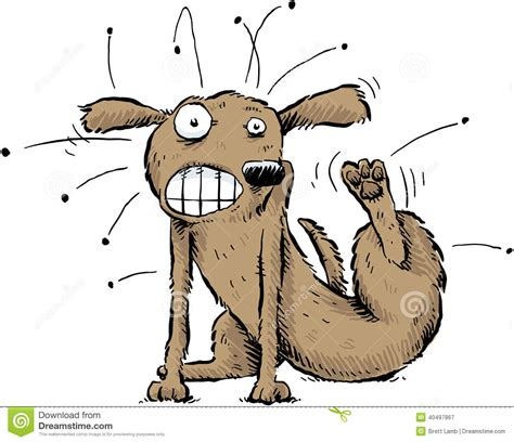 with fleas with fleas stock vector image 40497867