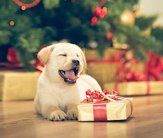 when do you give puppies their do you buy your gifts