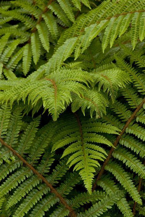 plants for shade garden zone 7 garden design ideas