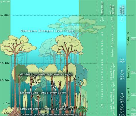 tropisches klima merkmale immerfeuchte tropen flora vegetation 1