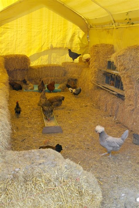 How To Keep Backyard Chickens How To Keep Chickens Two Unique Approaches For The Backyard Or Small Farm