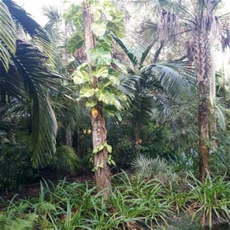 mckee botanical gardens vero mckee botanical garden 41 photos 17 reviews