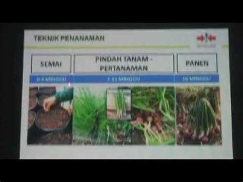 Bibit Bawang Merah Tuk Tuk teknik praktis budidaya benih bawang merah varietas tuk