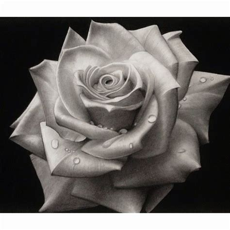 pictures of black and white rose tattoos black and white drawing sketch pencil