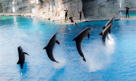 giardino dei libri rimini delfinario di rimini ministero ambiente non concede