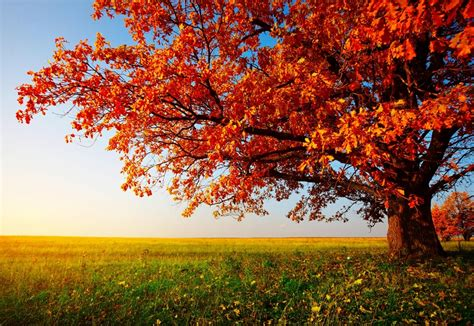 for fall beautiful fall trees phpearth