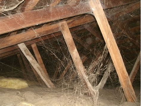 Attic Pest - attic pest https pestcemetery pest cemetery