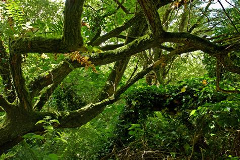 Woodland Tree - photography by martin eager landscape nature woodland