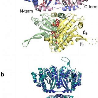 pdf structural studies of a bacterial trnahis