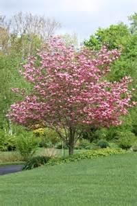 flowering shrubs for small gardens
