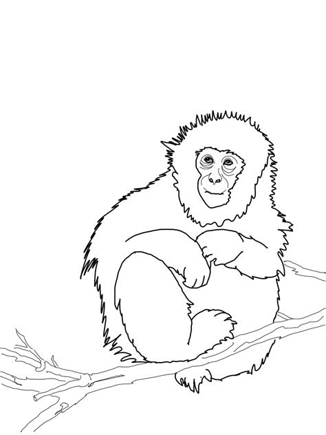 monkey love coloring pages monkey coloring pages love coloring pages 21 free