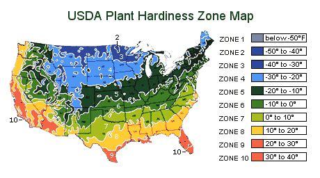 gardening in zone 9 9 plants