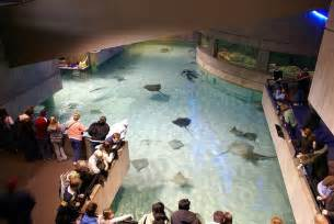Row Houses Baltimore - 10 largest biggest amp best aquariums in the world